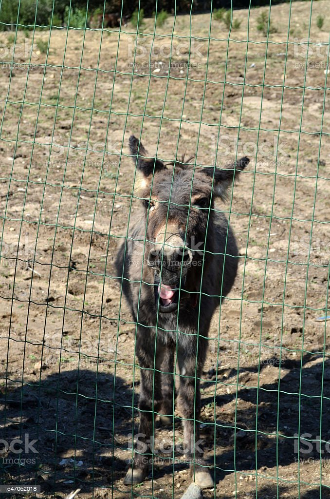 Donkey behind a wire mesh in Sardinia stock photo