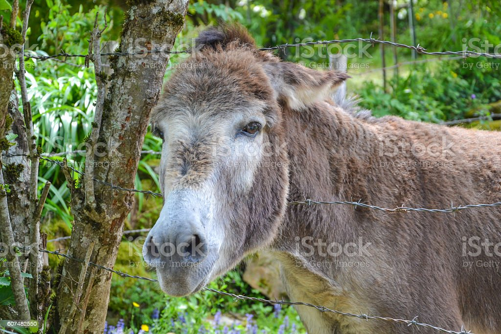 donkey between barbed wire stock photo