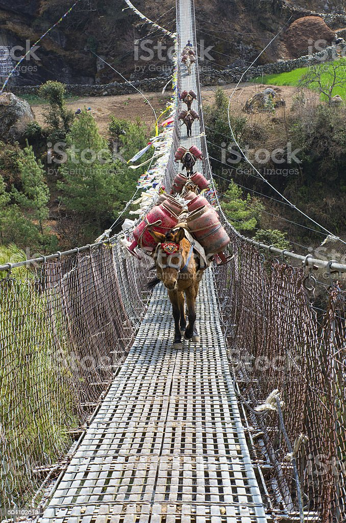 Donkey caravan in mountains on the bridge,  Nepal stock photo