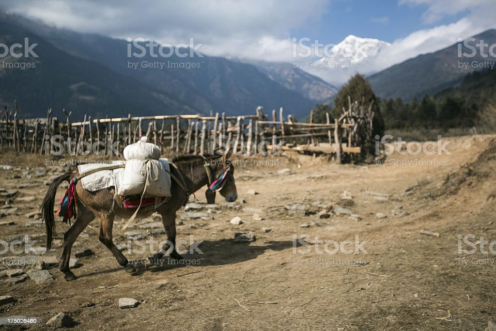 Donkey carrying supplies in the Himalayan mountains royalty-free stock photo