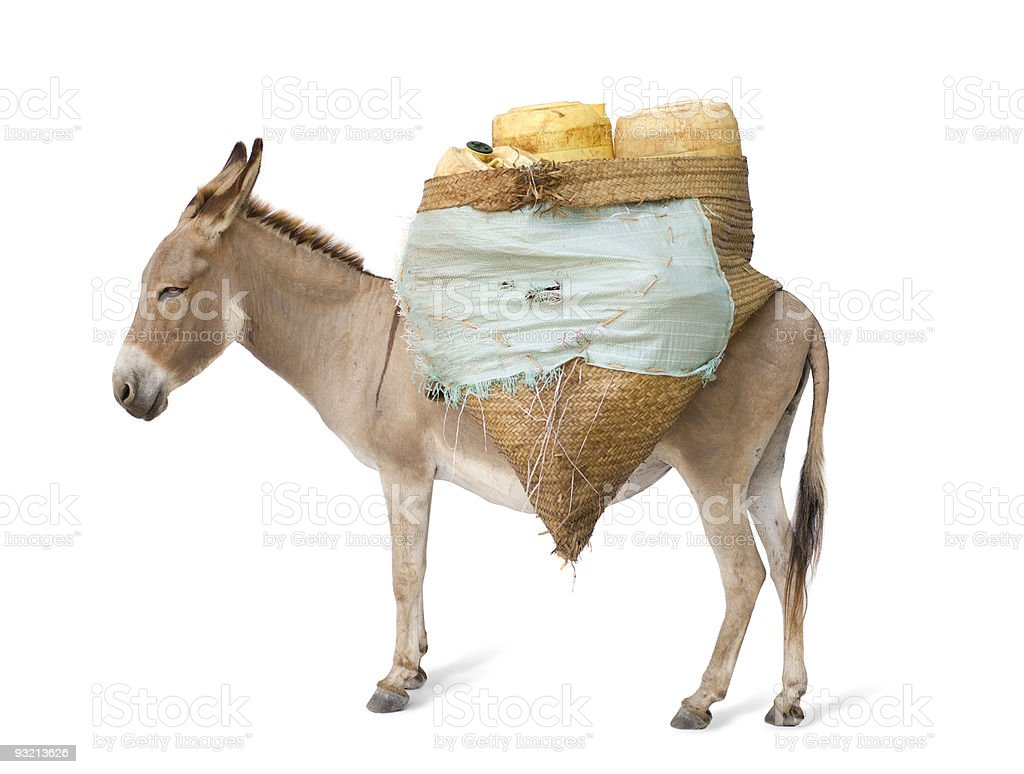 donkey carrying supplies stock photo