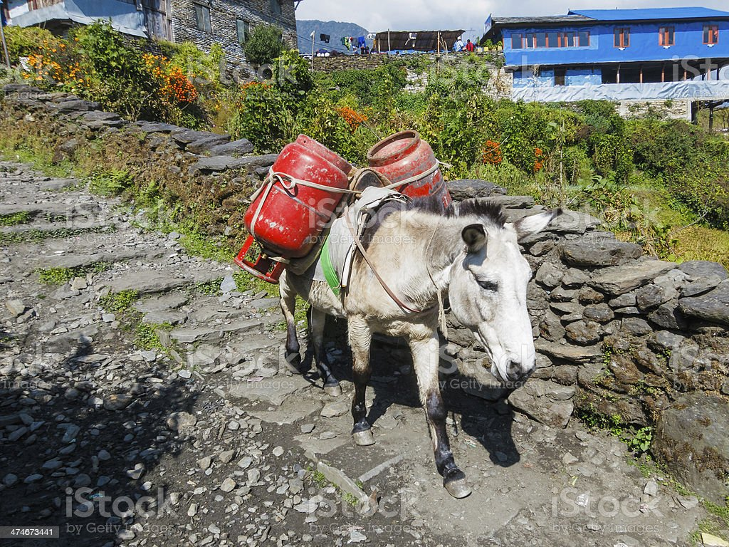 Donkey carrying two gas cylinders royalty-free stock photo