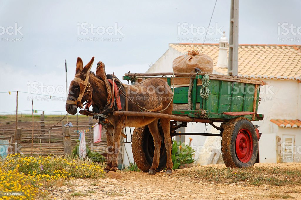 Donkey cart in the countryside in Portugal stock photo