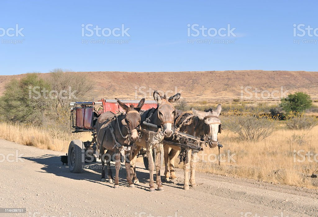 Donkey cart royalty-free stock photo