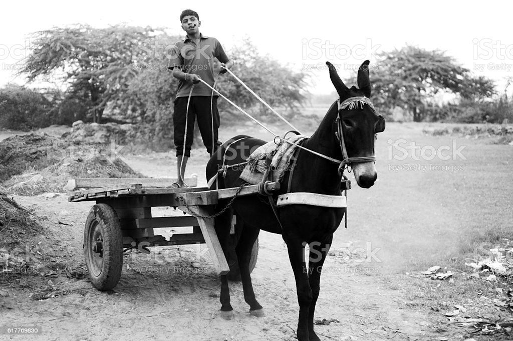 Donkey Cart stock photo