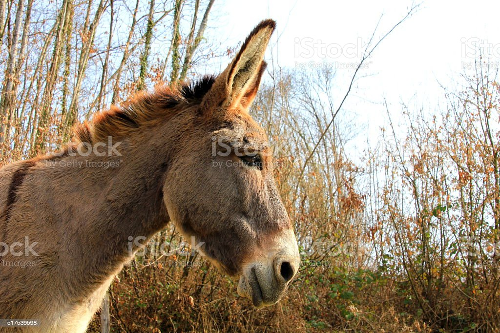 donkey head stock photo