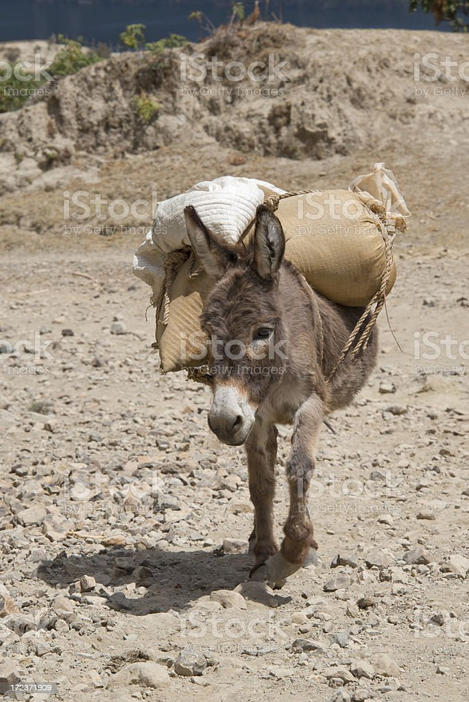 Donkey in a dry landscape carrying bags royalty-free stock photo