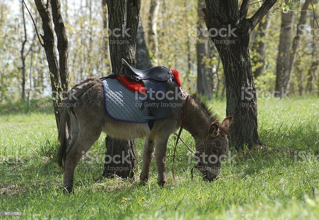 donkey in a park stock photo