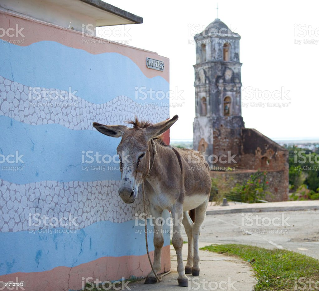 Donkey in Cuba stock photo