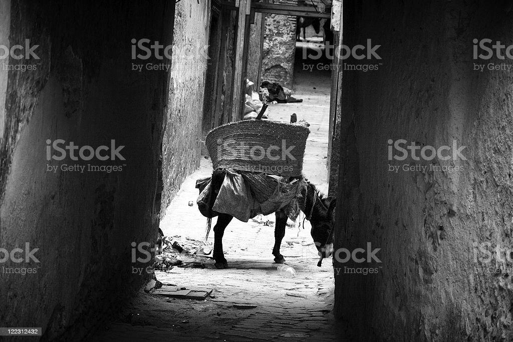 Donkey in Fez royalty-free stock photo