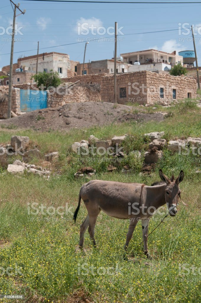Donkey in grass field stock photo