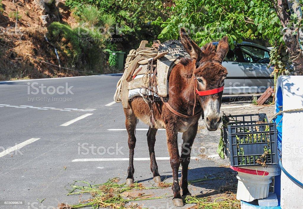Donkey in Greece stock photo