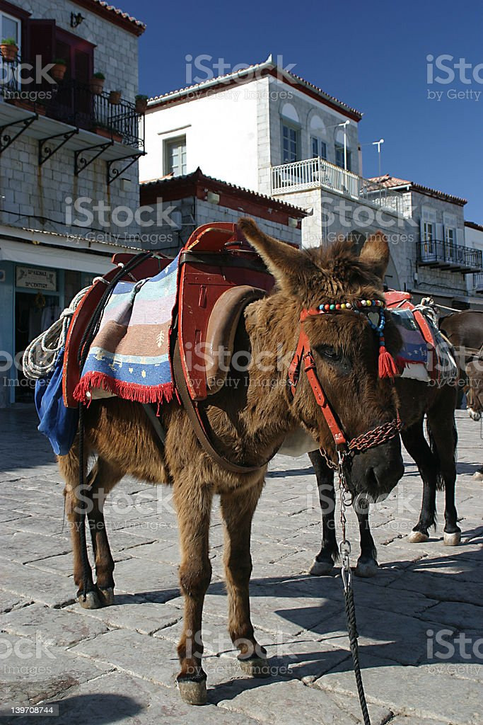 A donkey in Hydra, Greece stock photo