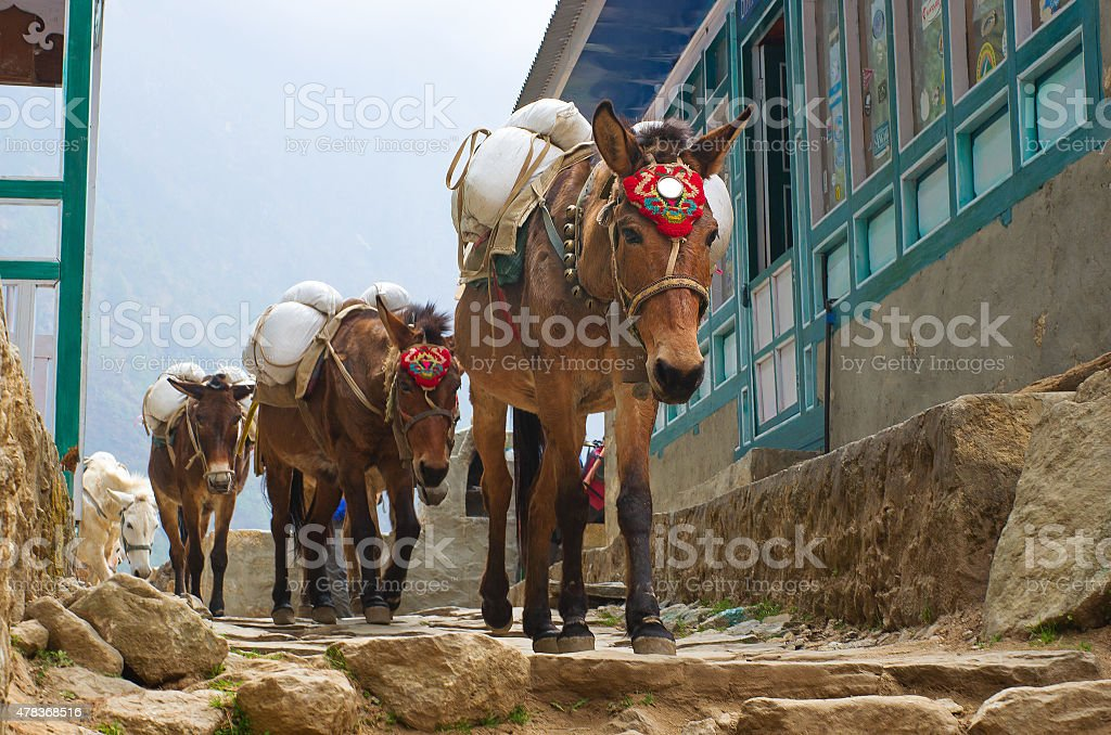 Donkey in mountains in the village,Nepal stock photo