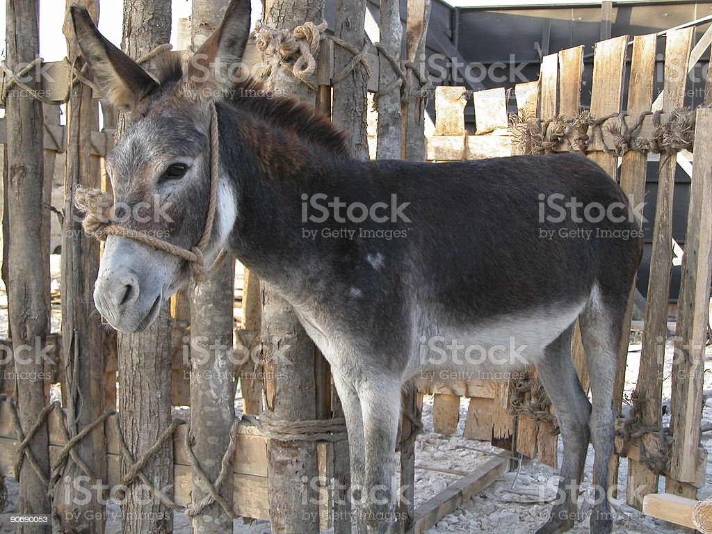 Donkey in pen royalty-free stock photo