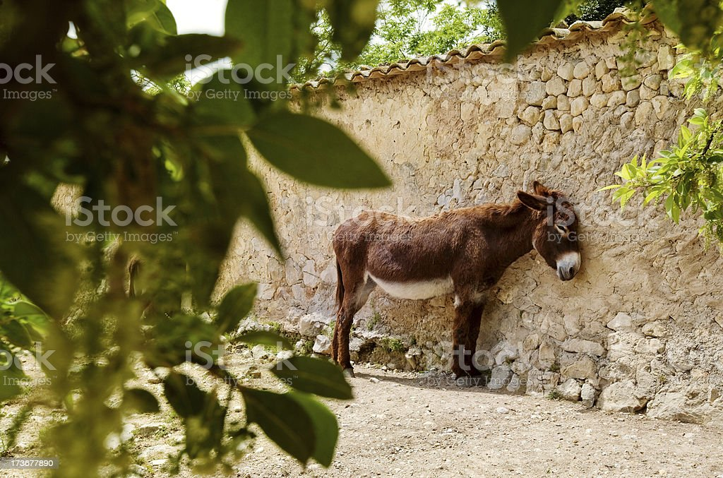 donkey in spain royalty-free stock photo