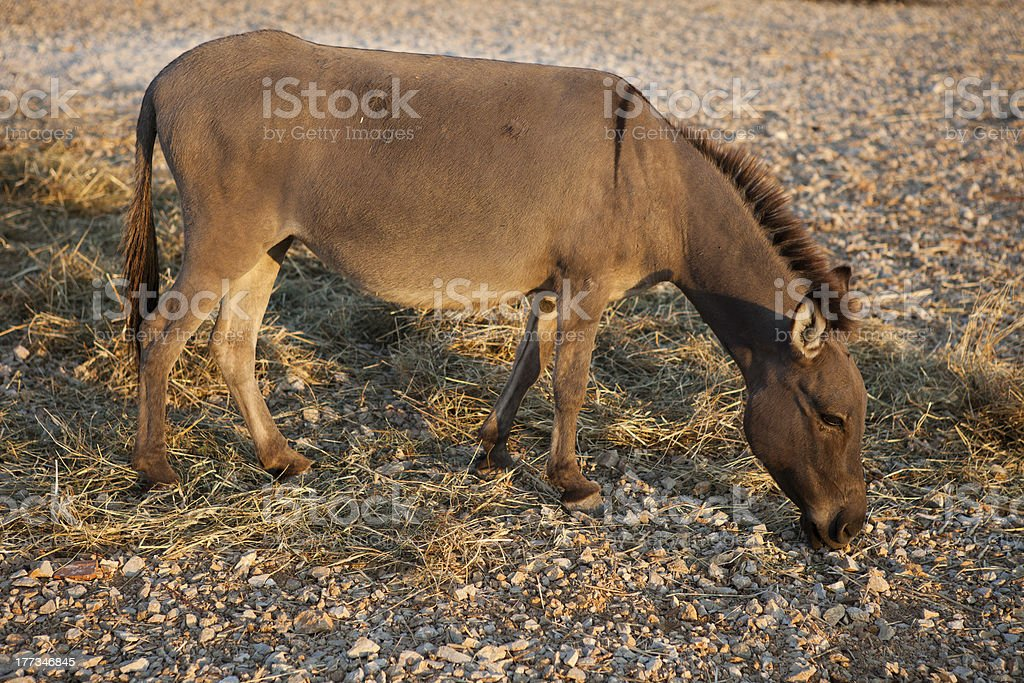 Donkey In The Farm royalty-free stock photo
