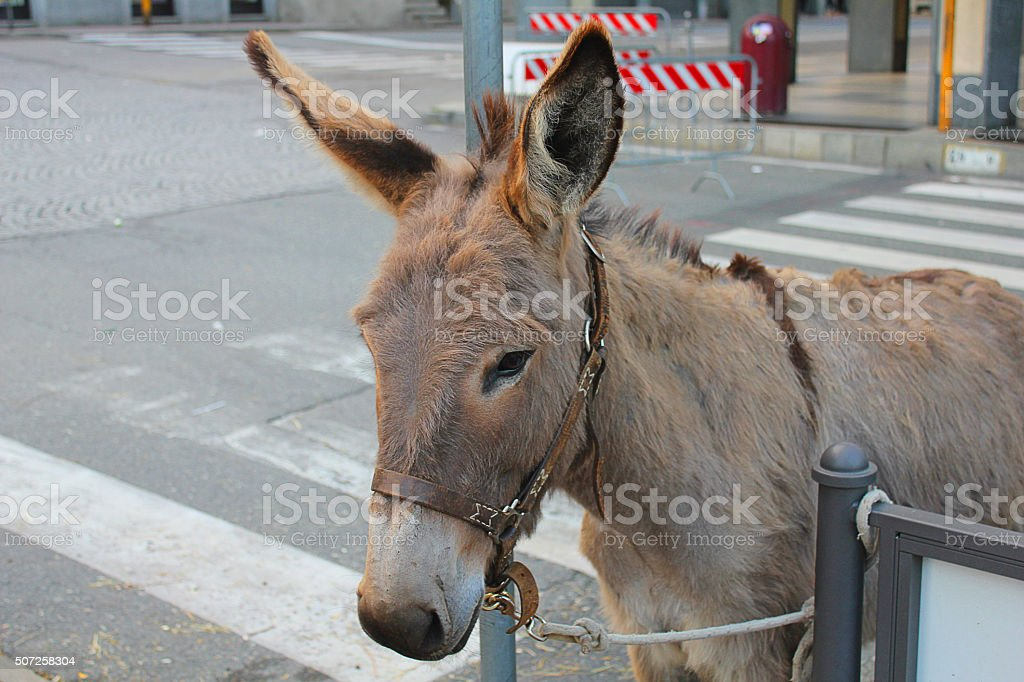 donkey in the street stock photo
