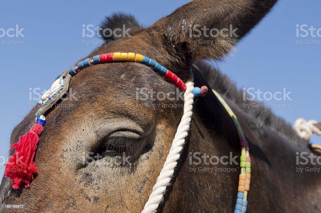 Donkey in Thira. royalty-free stock photo