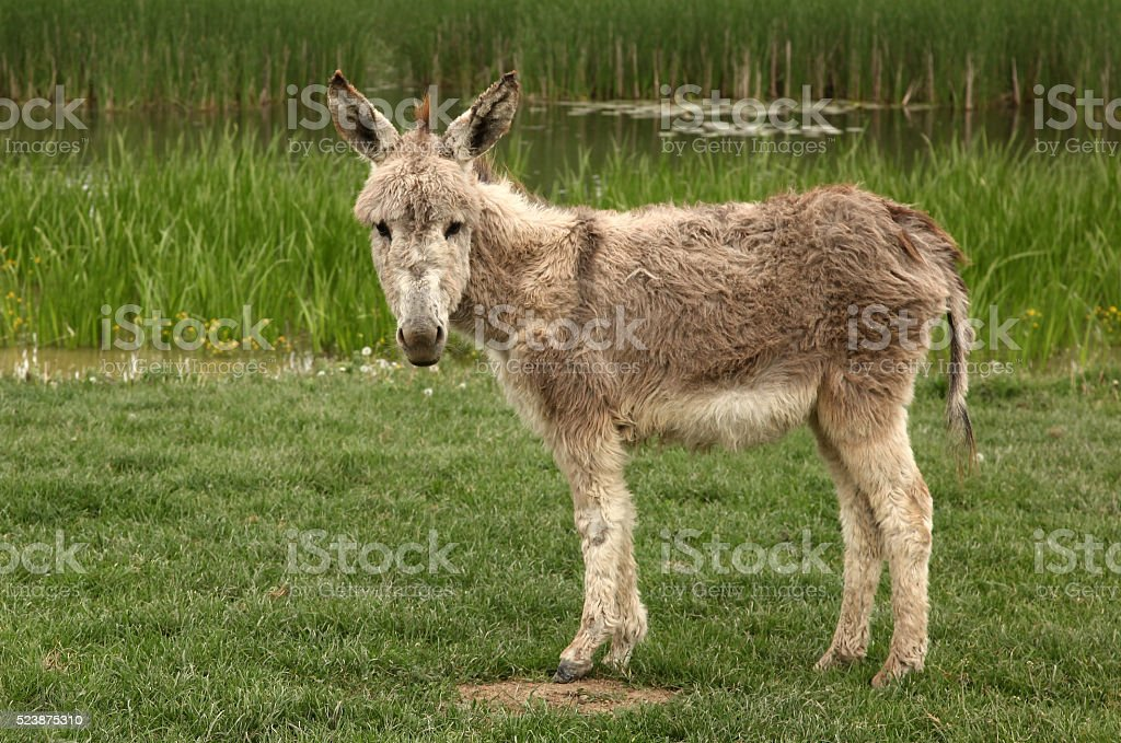 Donkey is standing on green grass field stock photo