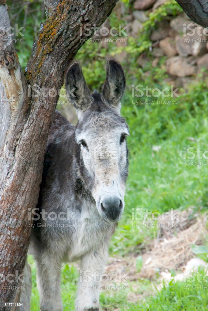 Donkey looking stock photo