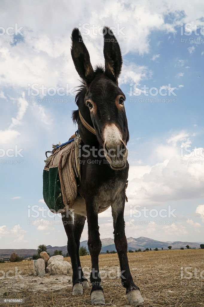 donkey looking to the camera in the countryside stock photo