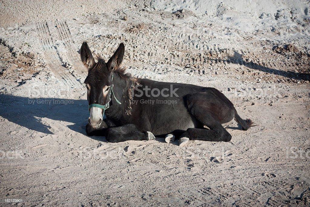 Donkey lying on the ground royalty-free stock photo