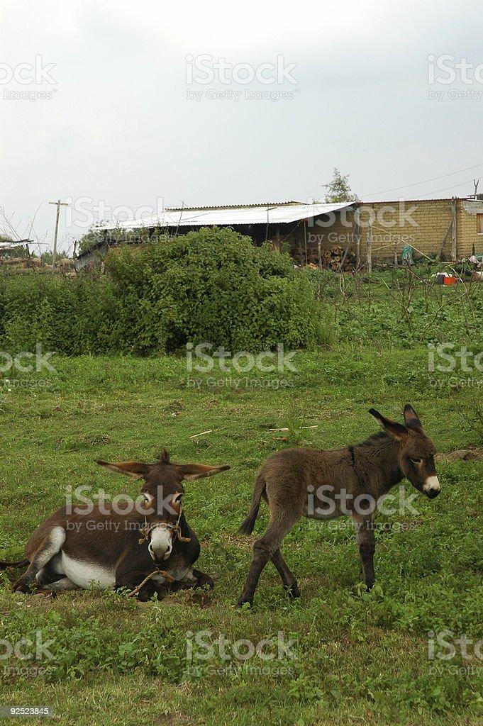 Donkey мама и ребенок Стоковые фото Стоковая фотография