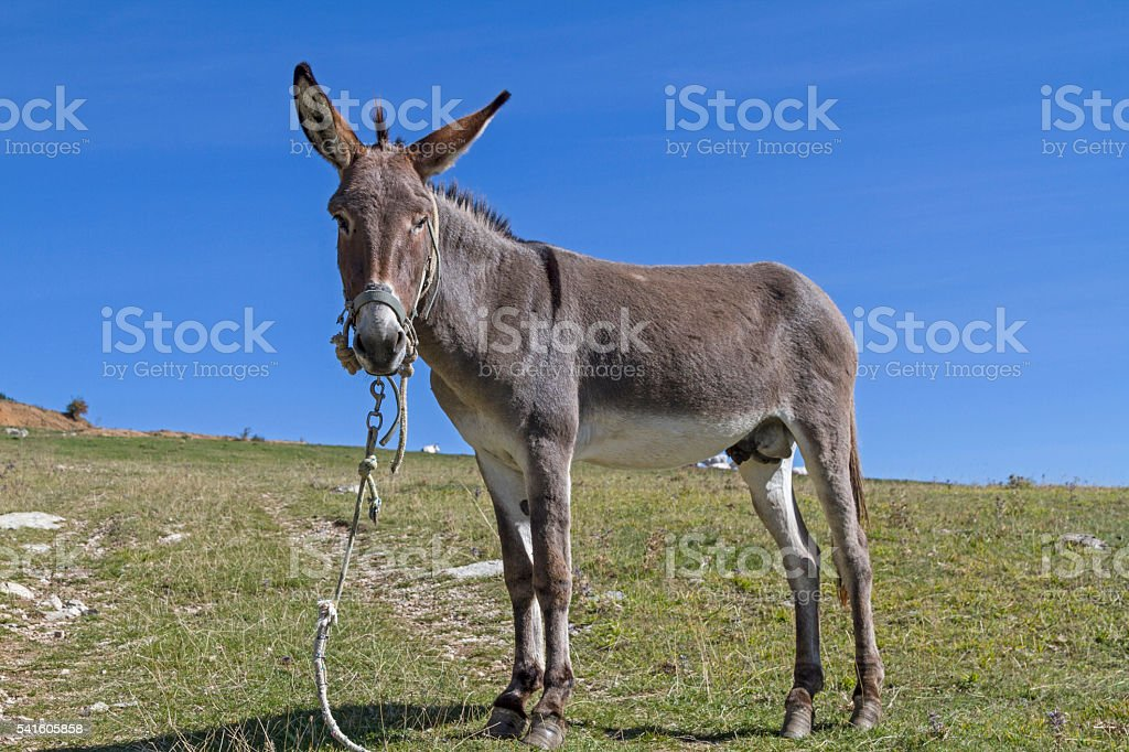 Donkey on mountain meadow stock photo