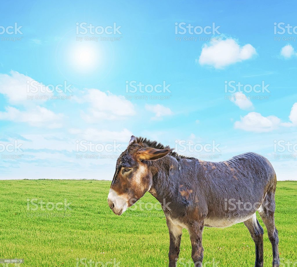 donkey on the grass royalty-free stock photo