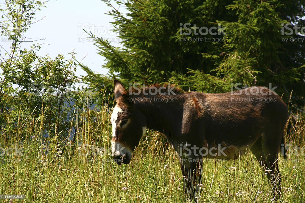 Donkey on the road in Italy stock photo
