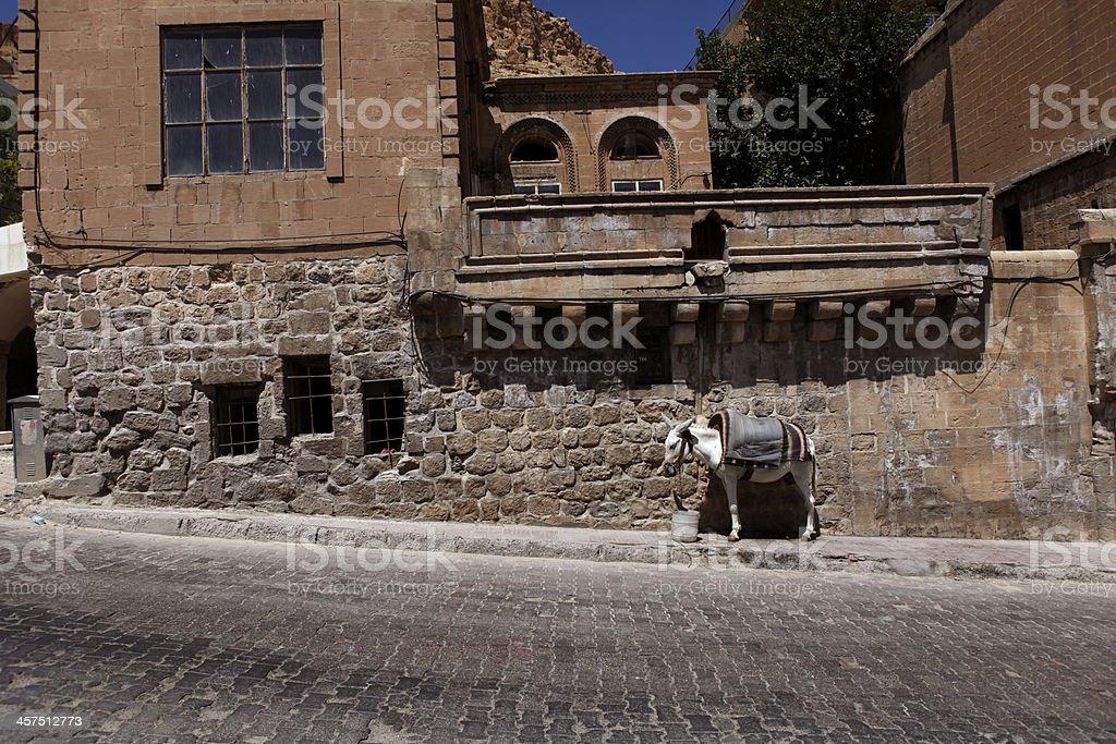 Donkey on the Street royalty-free stock photo
