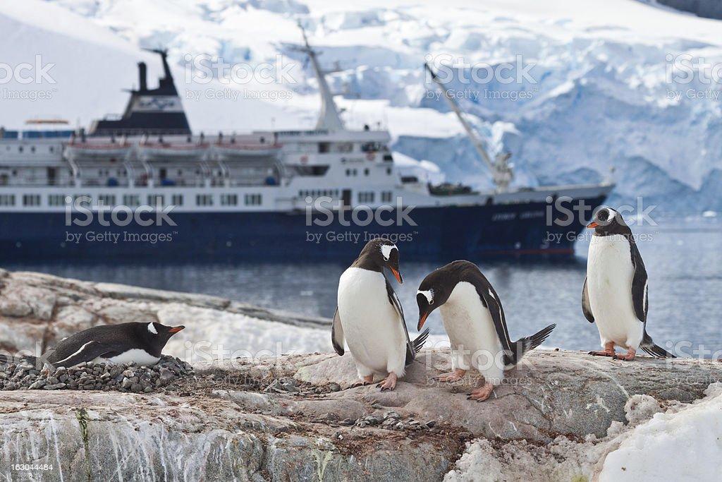 Eselspinguine (Pygoscelis papua) mit Kreuzfahrtschiff und Gletscherwand im Hintergrund stock photo