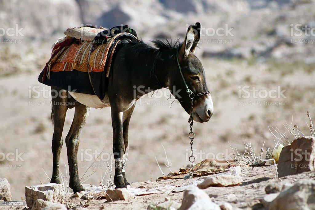 Donkey royalty-free stock photo
