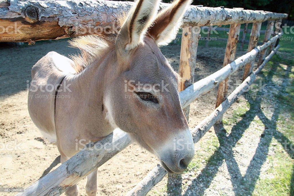 Donkey stock photo