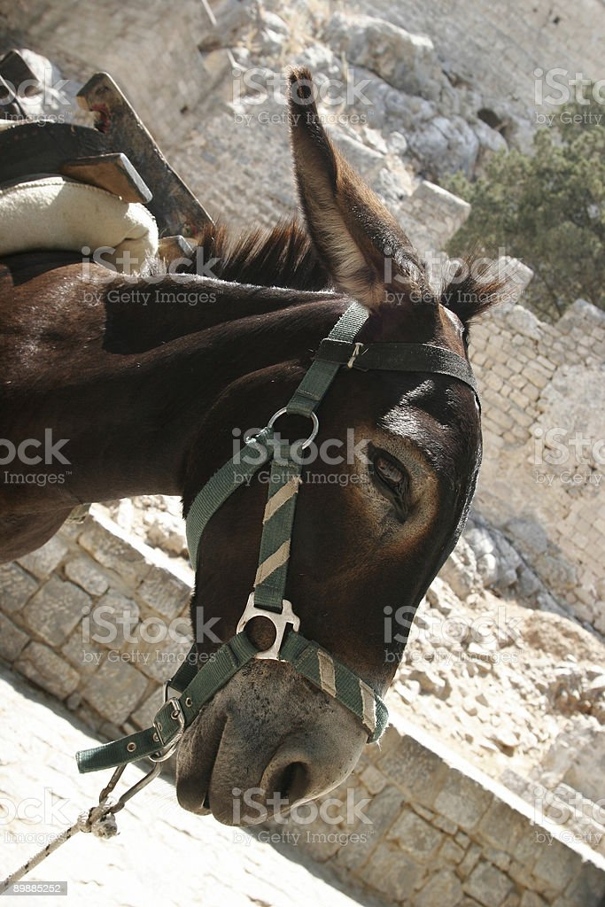 Donkey royalty-free stock photo