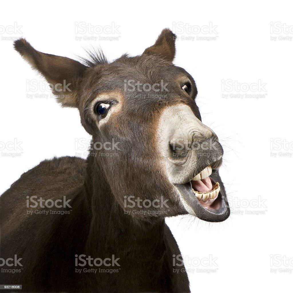 donkey (4 years) royalty-free stock photo
