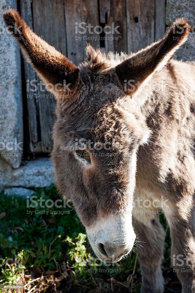 Donkey portrait, rural village, Avila, Spain stock photo