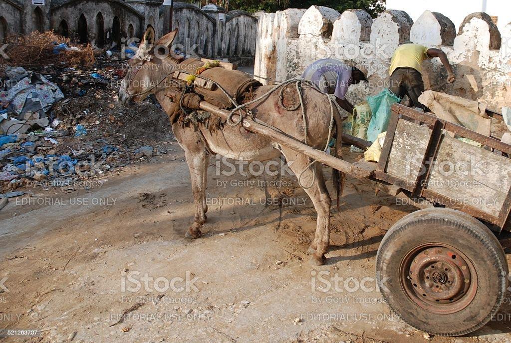 Donkey Pulling Cart royalty-free stock photo