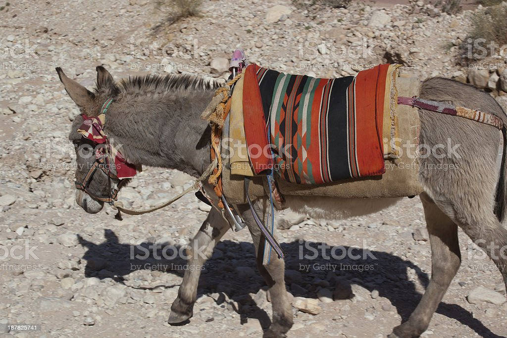 Donkey ready to ride stock photo