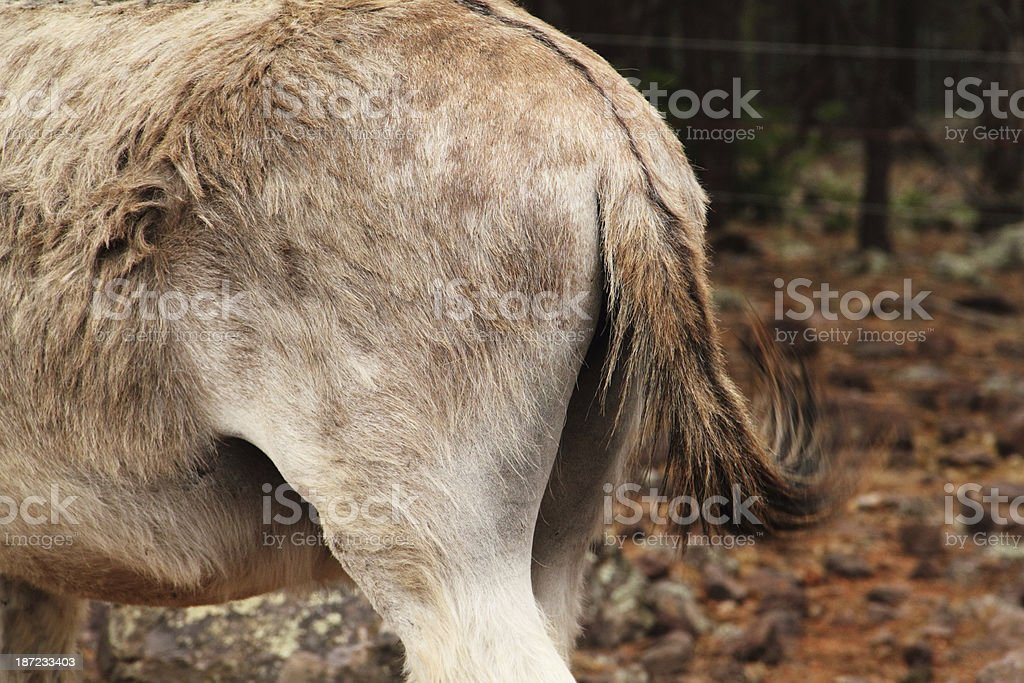 Donkey Rear End Buttocks stock photo