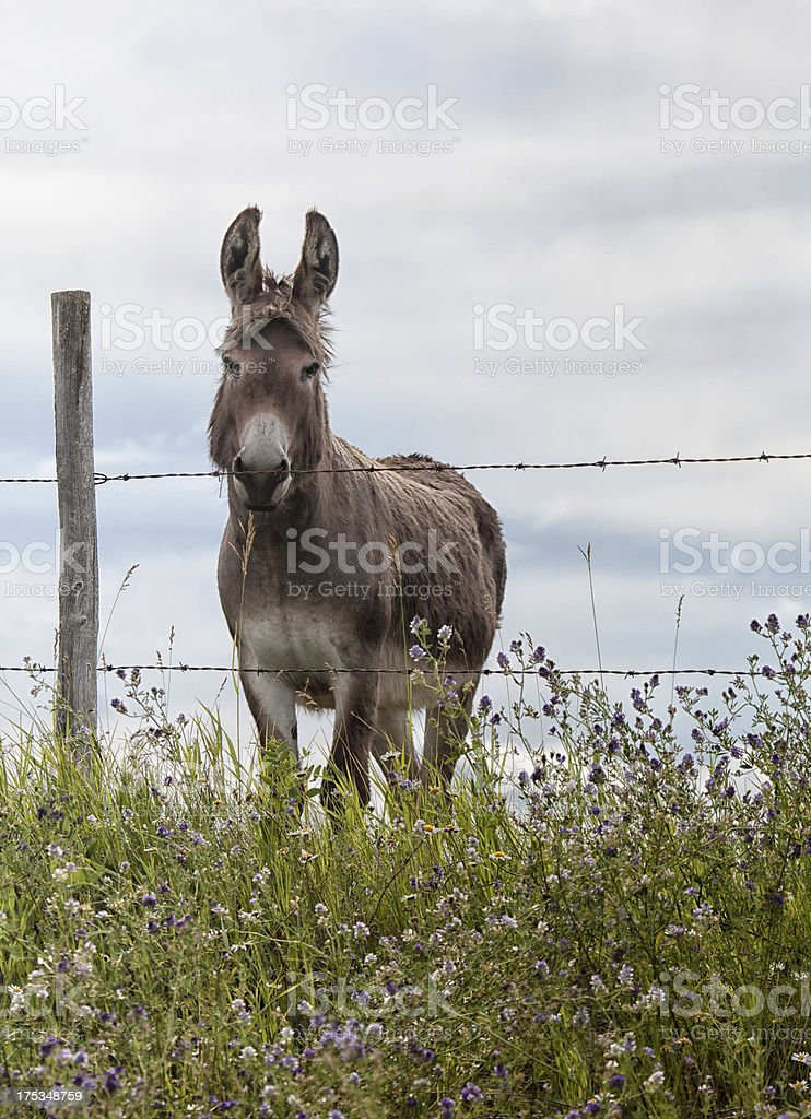 Donkey standing at the fence royalty-free stock photo