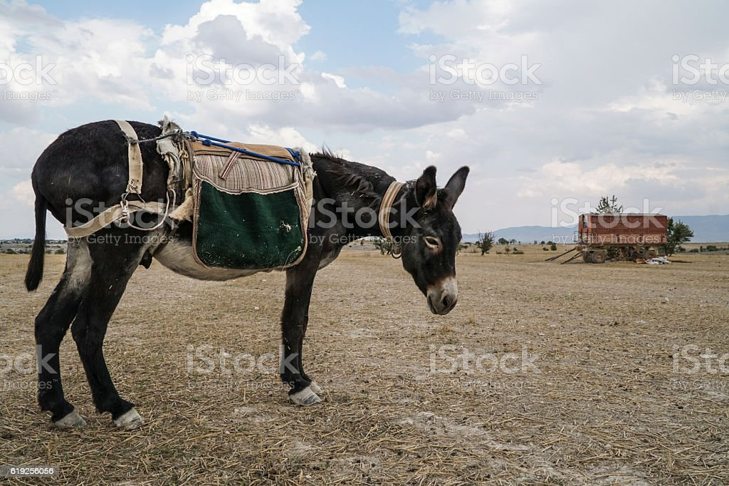 donkey standing in the countryside stock photo