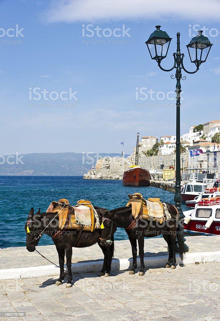 Donkey Taxi stock photo