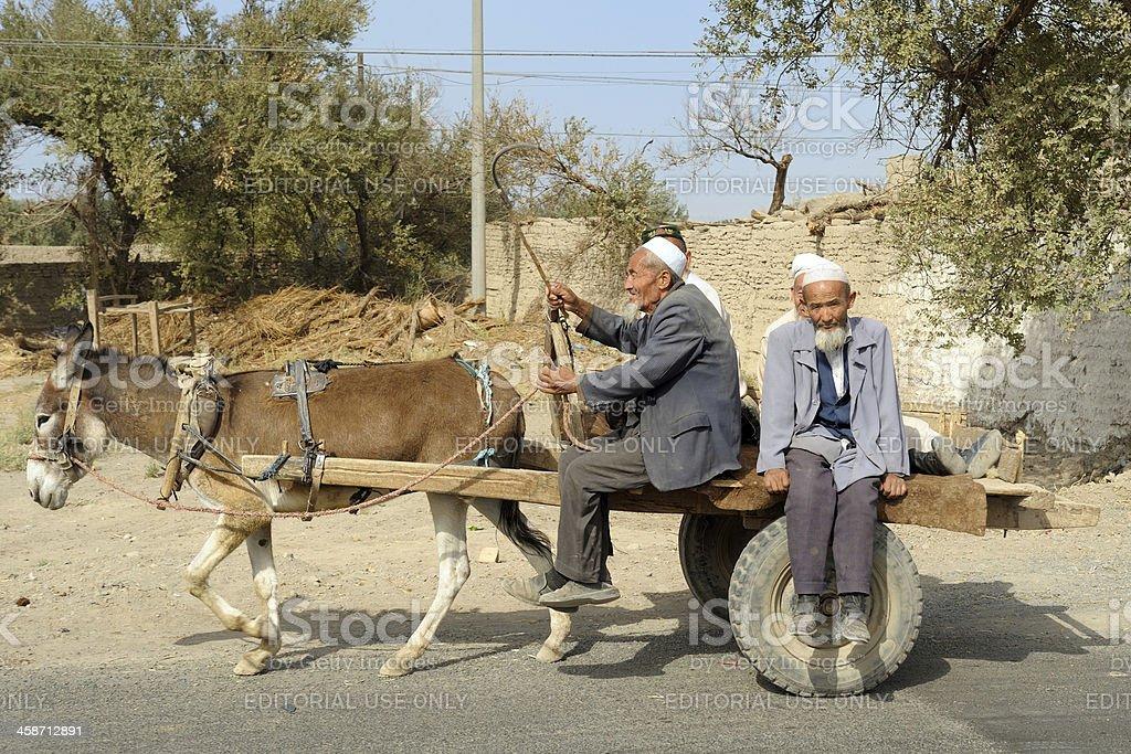 Donkey transportation stock photo
