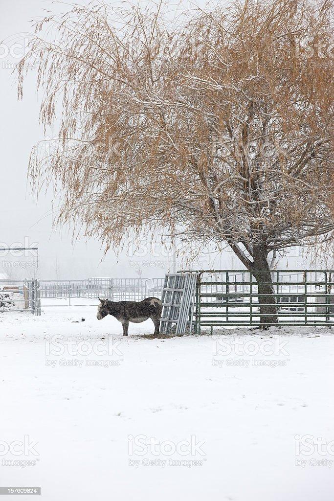 Donkey under a tree in snow. royalty-free stock photo