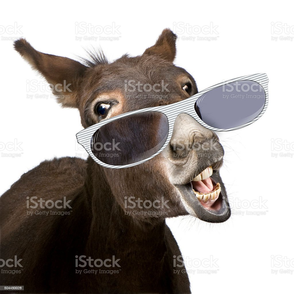 donkey wearing glasses in front of a white background stock photo
