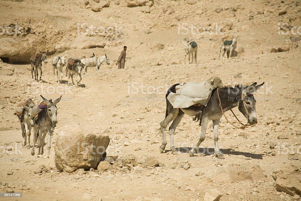 Donkey Work royalty-free stock photo