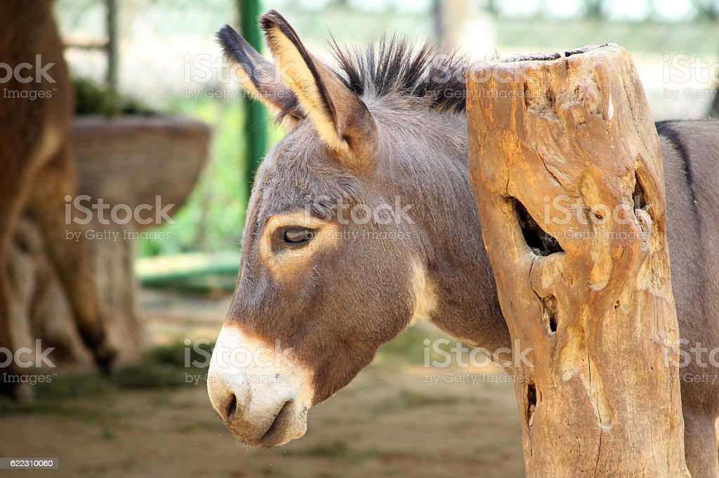 Donkey's head. stock photo