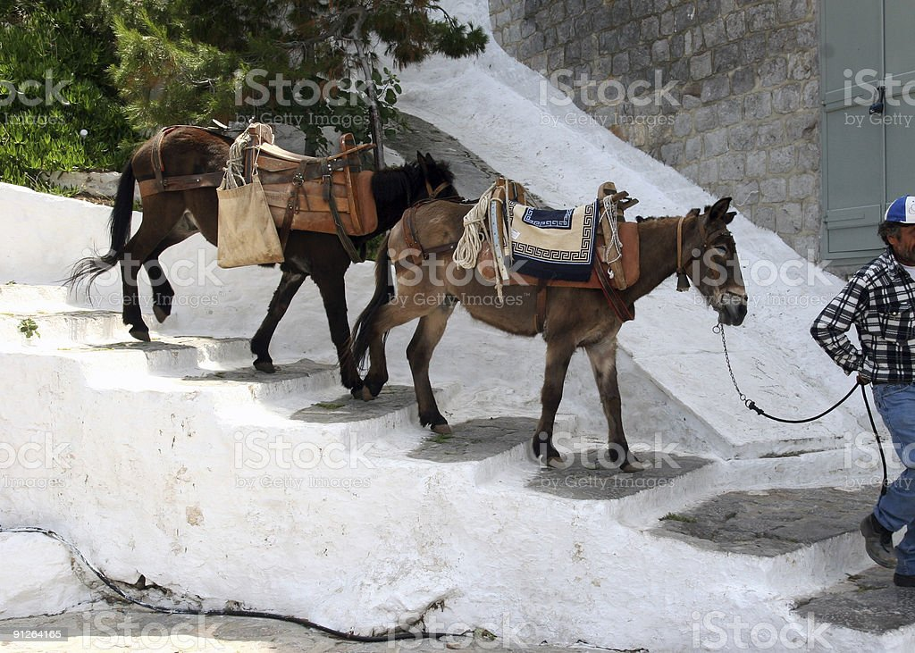 Donkeys in Hydra, Greece stock photo